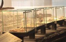 Gantry profile luminaries Column lighting bar in Natural History Museum